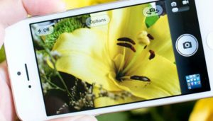 taking image of yellow flower