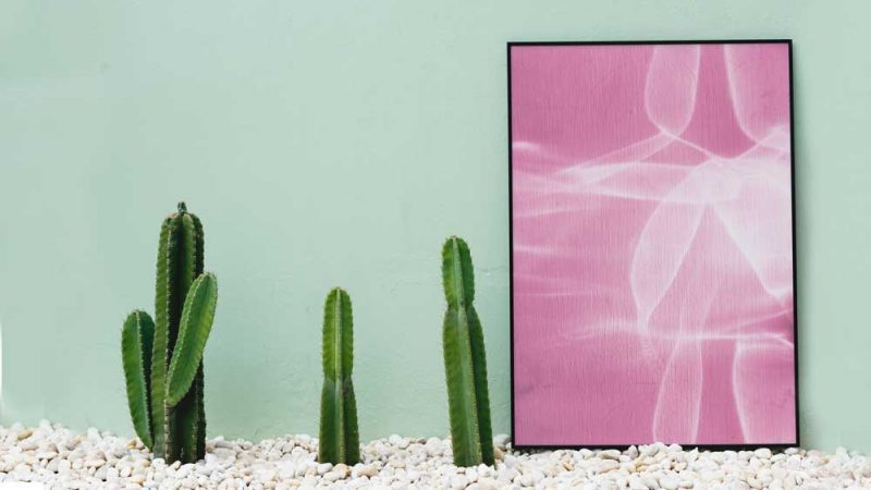 A Pink photo in a frame near cactus plants, on a bed of rocks near green wall