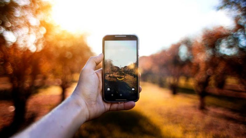 Hand taking an image of autumn foliage with a smartphone