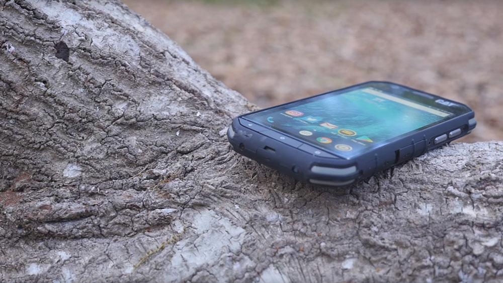 Cat S31 lying on tree trunk