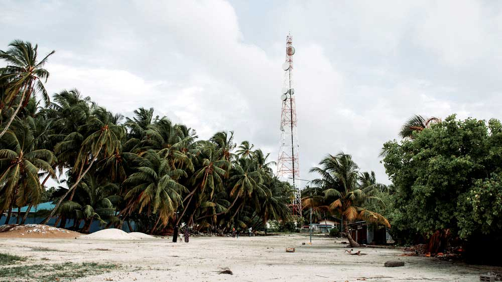 Cell tower being palm tree on beach